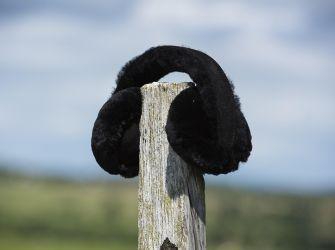 Sheepskin Ear Muffs (choice of colours)